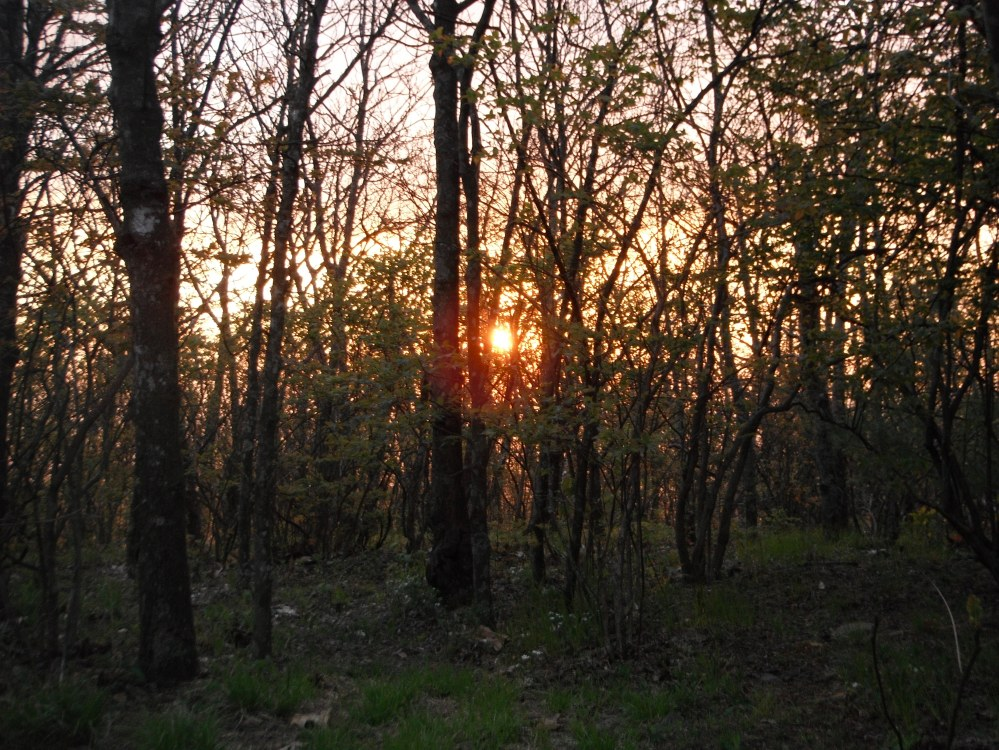 Sunset from my tent near the Springer Mountain Shelter