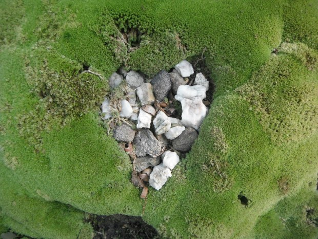 A rocky heart, set in moss