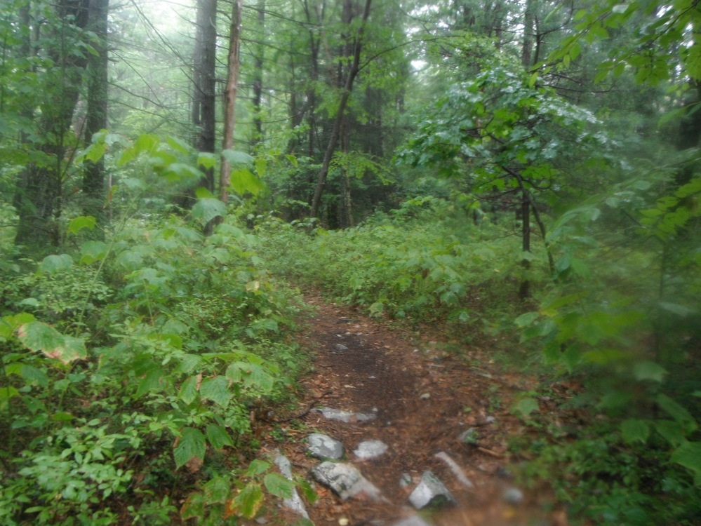 A rainy forest