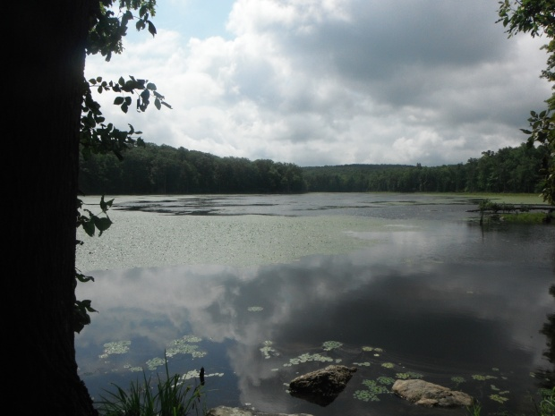 Another beautiful New Jersey pond