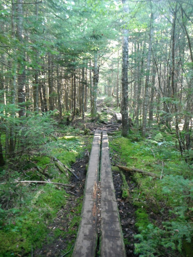 An old trail in spruce-fir forest