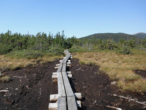 Some much-appreciated bog bridges