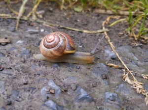 A little snail