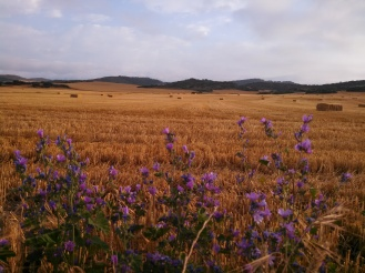 Farmland stretching toward the horizon