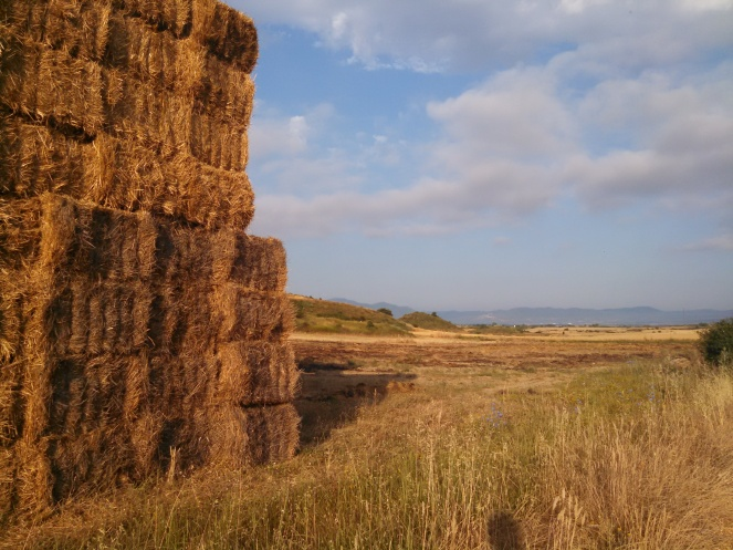Stacked square bales